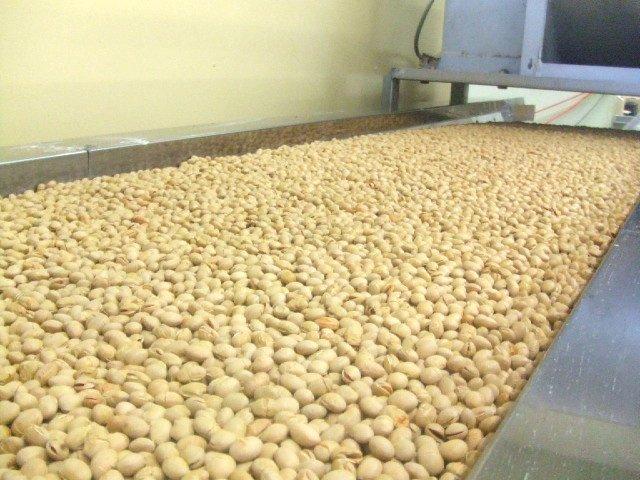 業務用 新潟県産いり大豆